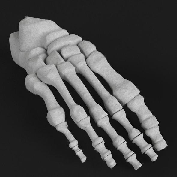 Anatomy - Human Foot bones - 3DOcean Item for Sale