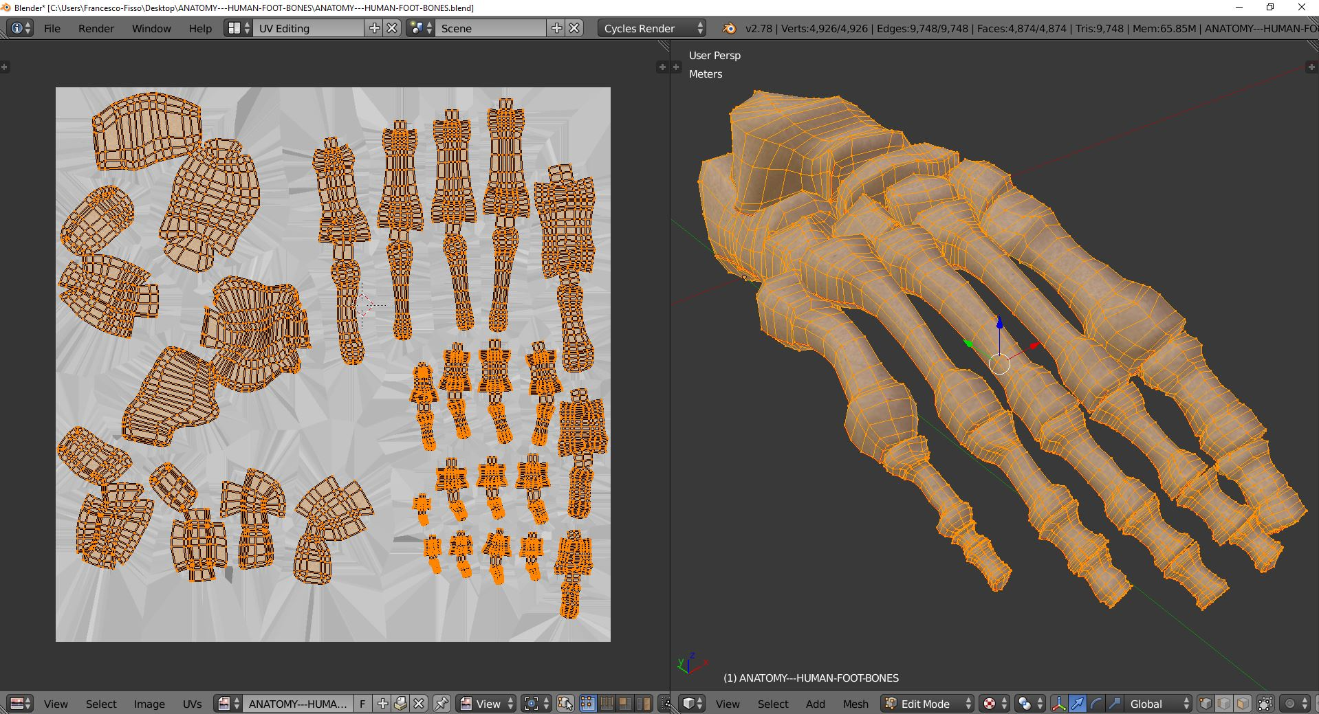 Anatomy Human Foot Bones By Francescomilanese 3docean