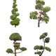 decorative pine tree - PhotoDune Item for Sale