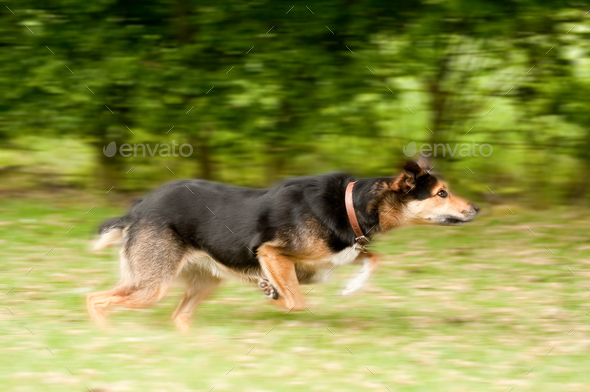 dog motion blur - Stock Photo - Images