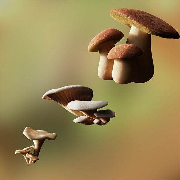 Game ready PBR Mushrooms SET 1 - 3DOcean Item for Sale