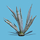 Agave Plant-3D Scan