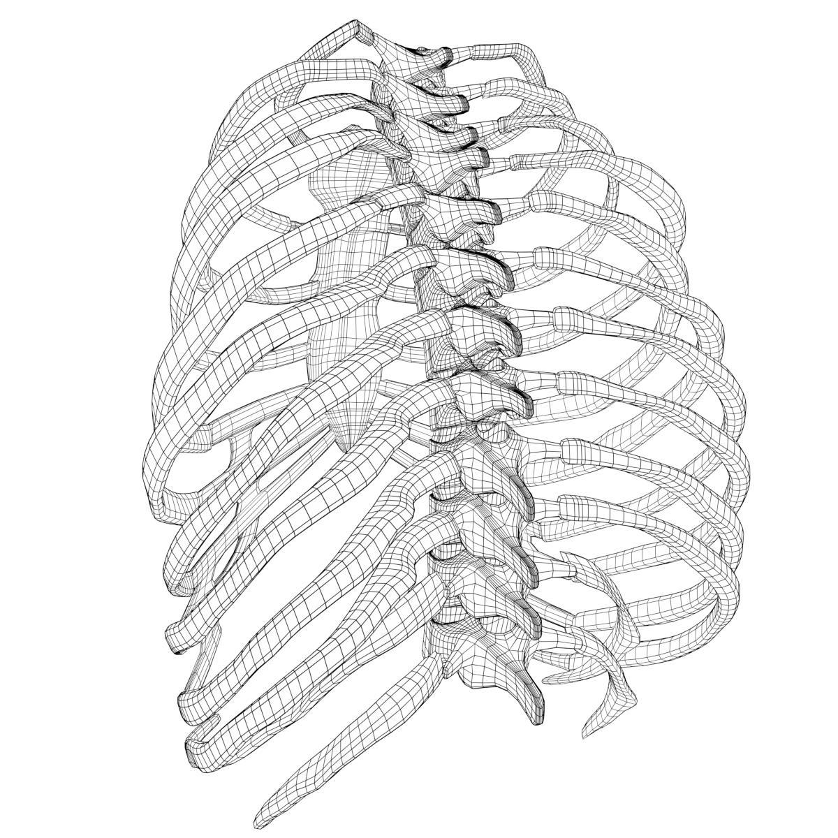 Anatomy Human Rib Cage By Francescomilanese 3docean