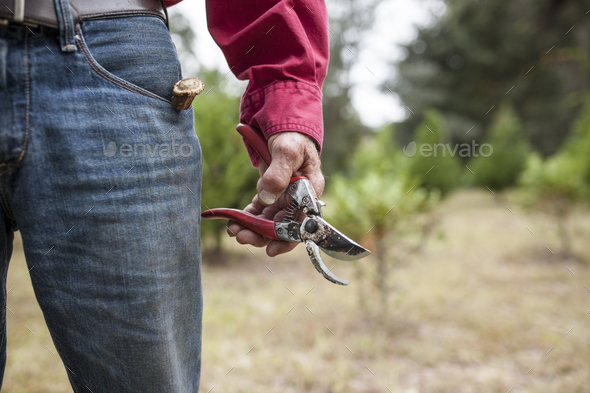 weathere hands holding pruning shears - Stock Photo - Images