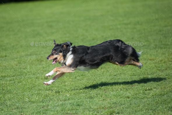 dog running downhill