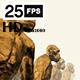 Apes 7 HD