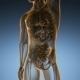 Anatomy Scan of Human Colon