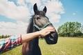 Man caress horse