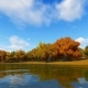Autum Forest Landscape 3D Render - VideoHive Item for Sale