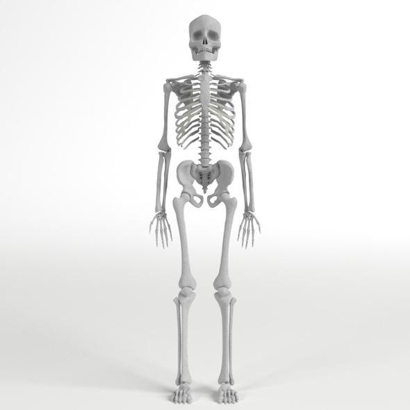 3DOcean Anatomy Complete Human Skeleton 20294097