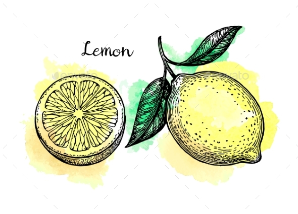 Lemon Sketch Set - Food Objects
