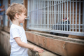 Young boy looking at pheasant in a zoo