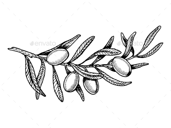 Olive Branch Engraving Style Vector Illustration - Flowers & Plants Nature