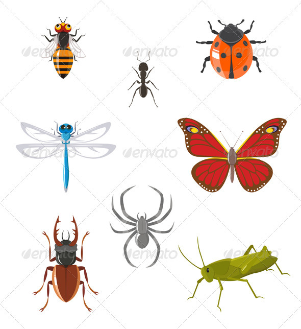 Insect Icon Set - Animals Characters