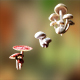 Game ready PBR Mushrooms SET 3 - 3DOcean Item for Sale
