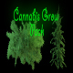 Cannabis Grow Pack - VideoHive Item for Sale