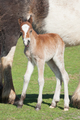 new foal - PhotoDune Item for Sale