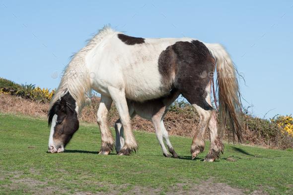 newborn foal feeding