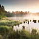 summer sunrise over wild swamp - PhotoDune Item for Sale