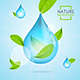 Nature Concept Transparent Purity Drop Water and Fly Green Leaves. Vector
