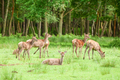 deer in woodland - PhotoDune Item for Sale