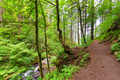 Columbia River Gorge Trail - PhotoDune Item for Sale