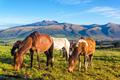 Horses in Rural Ecuador - PhotoDune Item for Sale
