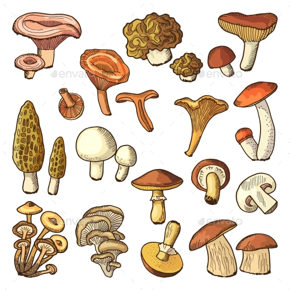 Colored Nature Vector Illustrations of Mushrooms - Food Objects