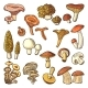 Colored Nature Vector Illustrations of Mushrooms