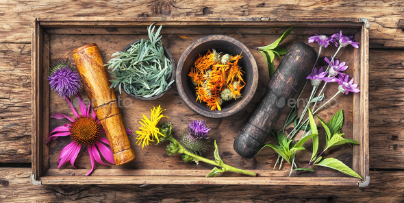 set healthy herbs - Stock Photo - Images