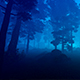 Evening Forest And Fog - VideoHive Item for Sale