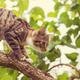 Kitten - PhotoDune Item for Sale