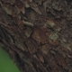 Camera Pans Through the Texture of a Tree Trunk Against a Forest Background - VideoHive Item for Sale
