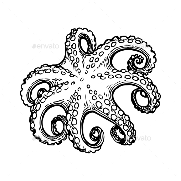 Octopus Ink Sketch. - Food Objects