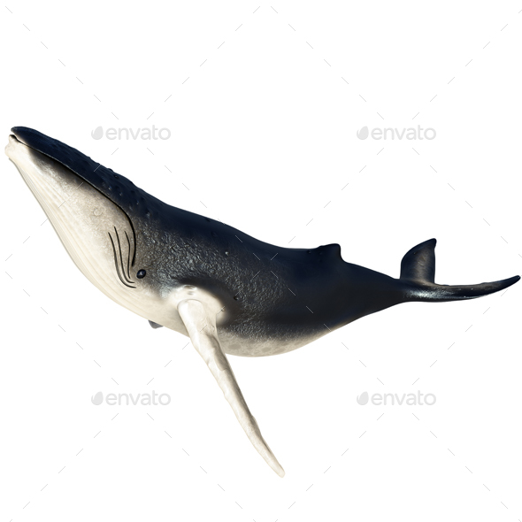 HumpBack Whale - Characters 3D Renders