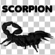Scorpion - VideoHive Item for Sale