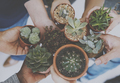 Diverse People Hands Hold Cactus Nature