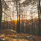 Sunset in beautiful forest. - PhotoDune Item for Sale