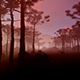 Tropical Forest At Sunset - VideoHive Item for Sale