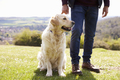 Close Up Of Golden Retriever On Walk In Countryside - PhotoDune Item for Sale