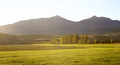 Sheep Grazing Near Queenstown In New Zealand's South Island - PhotoDune Item for Sale