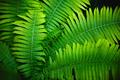 Fern leaves full screen - PhotoDune Item for Sale