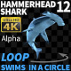 Hammerhead Shark 12 Swims in a Circle-2 - VideoHive Item for Sale