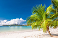 Beautiful beach with palm tree at Seychelles - PhotoDune Item for Sale