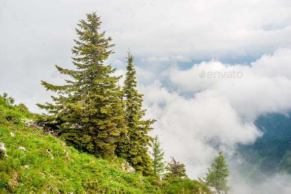 Bavarian landscape - Stock Photo - Images