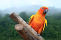 Macaw Parrot on forest background