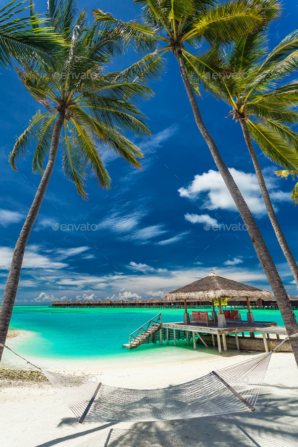 Hammock between palm trees on a tropical beach, Maldives - Stock Photo - Images