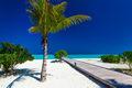 Palm tree in tropical perfect beach with jetty - PhotoDune Item for Sale