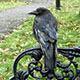 Ravens City Park