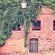 Vine and ivy growing on an old building brick wall. - PhotoDune Item for Sale